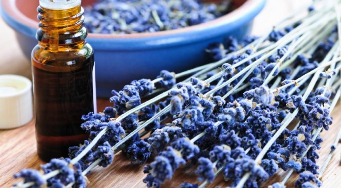 Historical Use of Lavender Essential Oil
